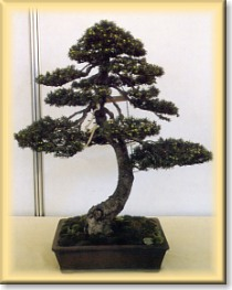 Crespi Bonsai World